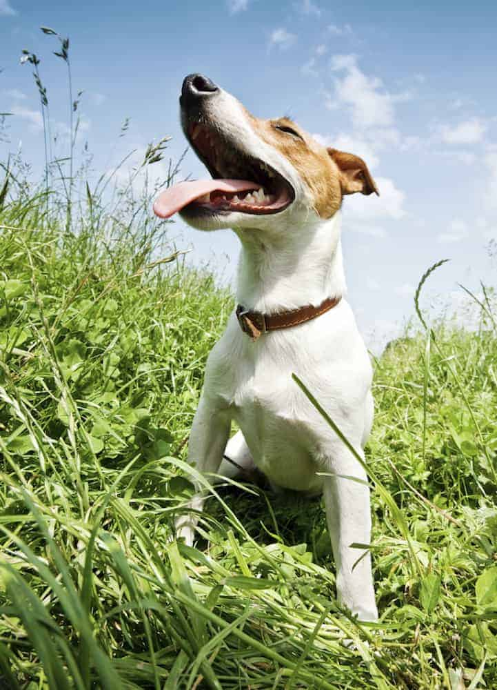 Tips For Keeping Your Dog Cool This Summer - Go For Walks When It's Cooler