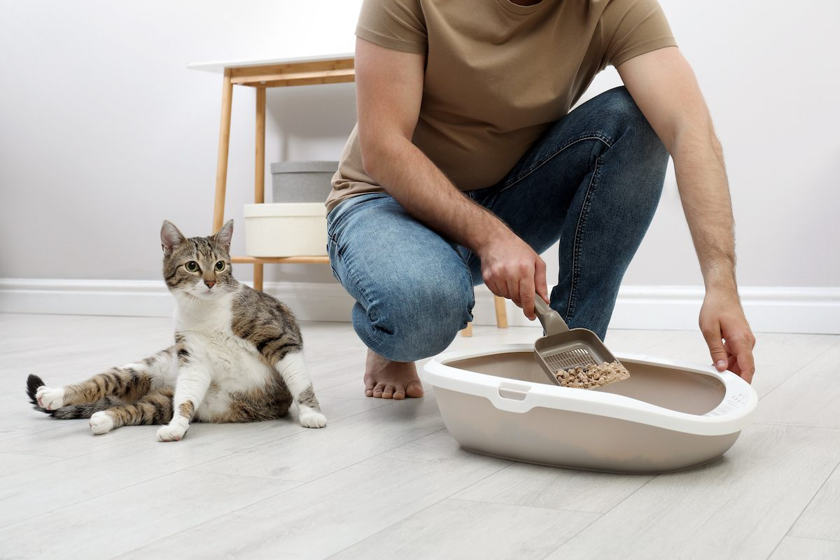 cleaning a litterbox