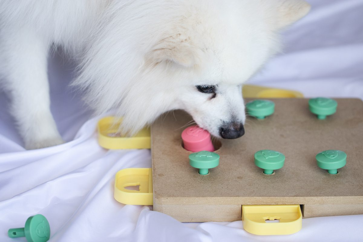 dog puzzle for seperation anxiety